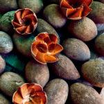 Recorrido gastronómico por Oaxaca