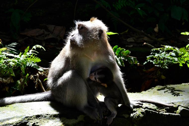 monkey temple Indonesia