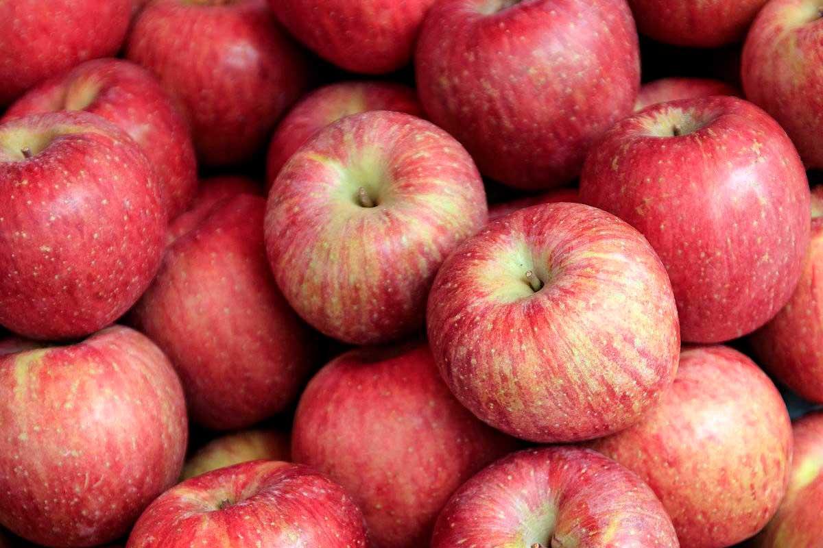 4 maneras de mantener tus manzanas frescas durante más tiempo |