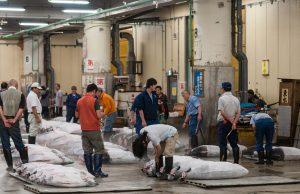 mercado de pescado tokio toyosu
