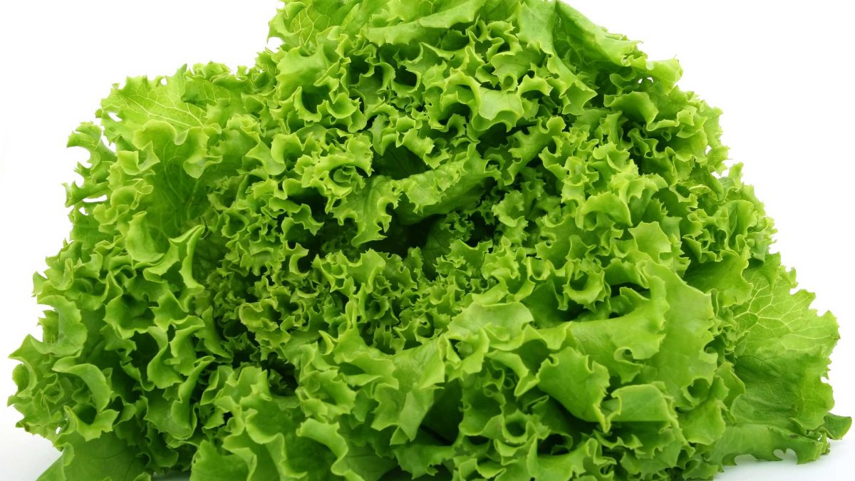 Lechuga romana brote de E.coli