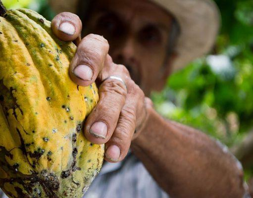 México brilla en la premiación chocolatera más grande del mundo