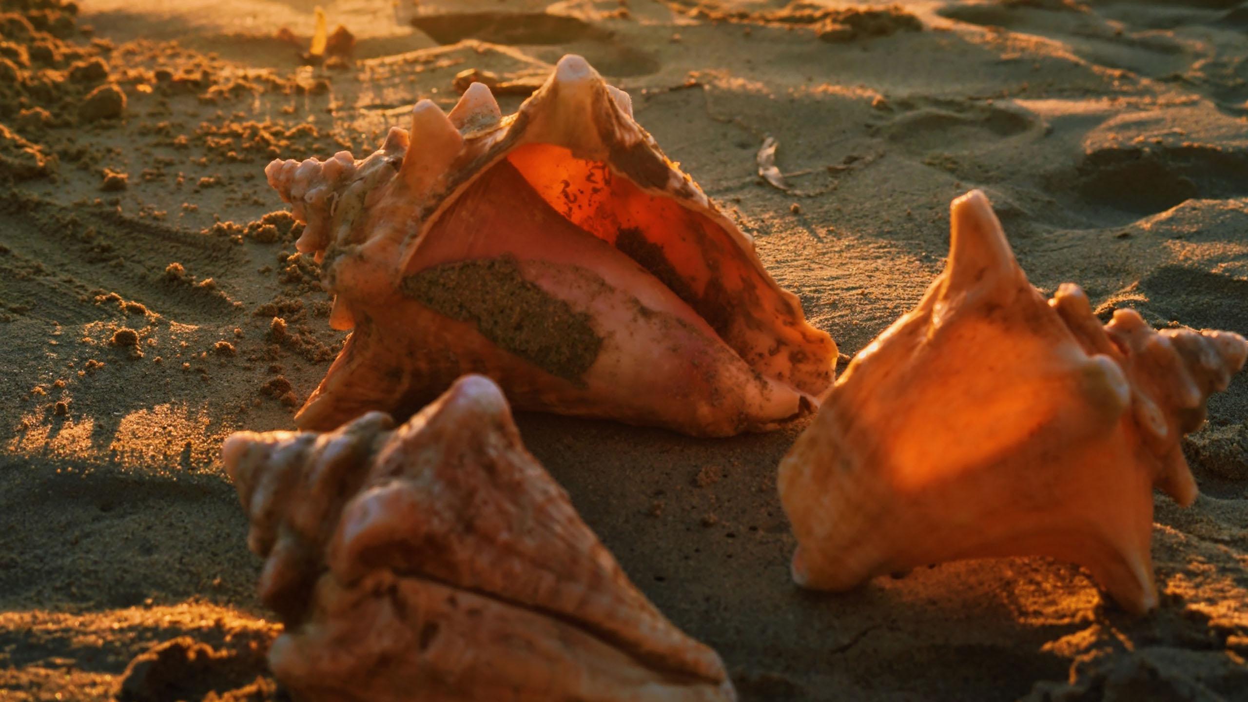 caracolas en peligro de extinguirse en Las Bahamas