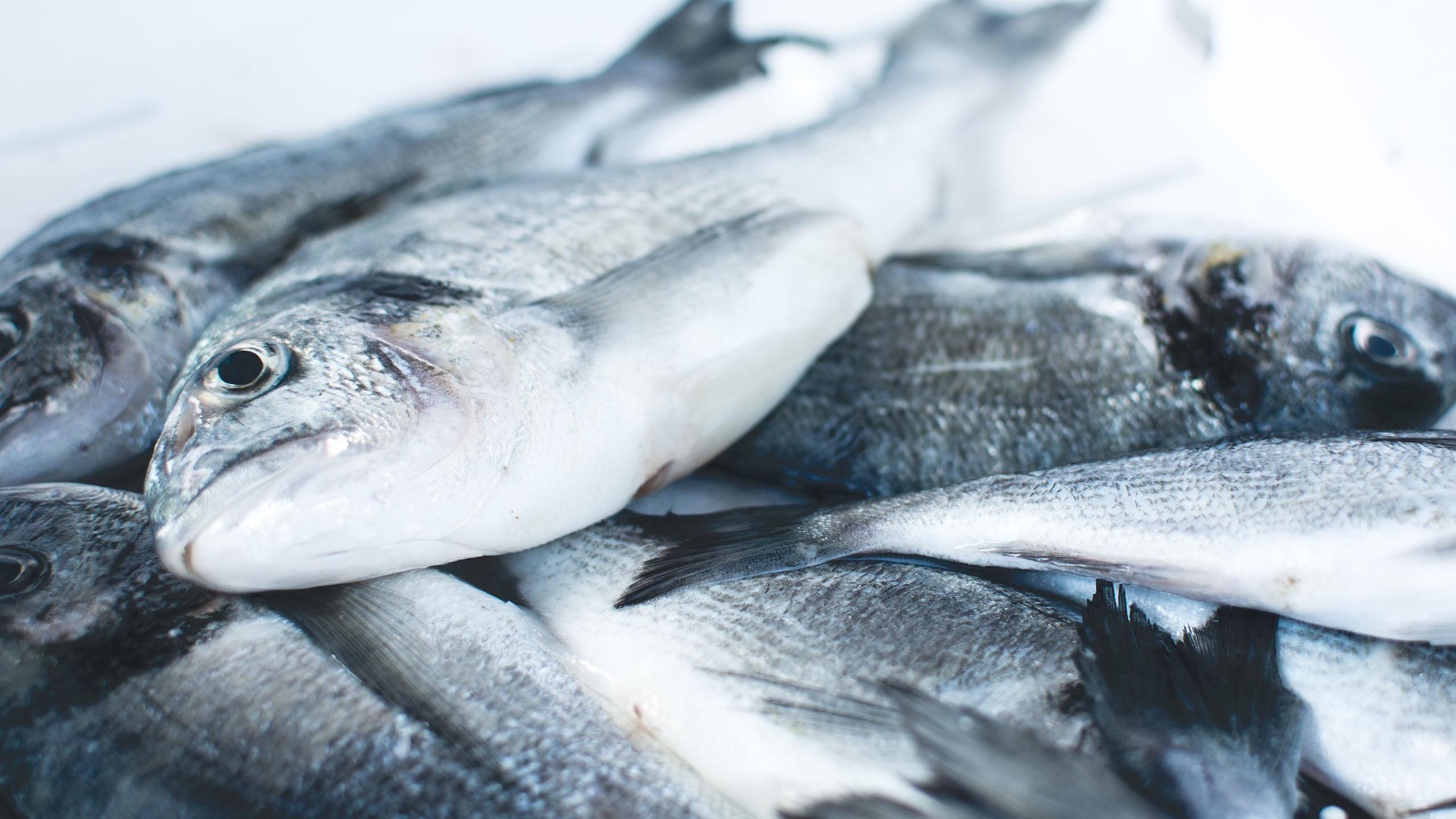 una tienda de mariscos colocó ojos falsos en sus pescados para que se vieran más frescos