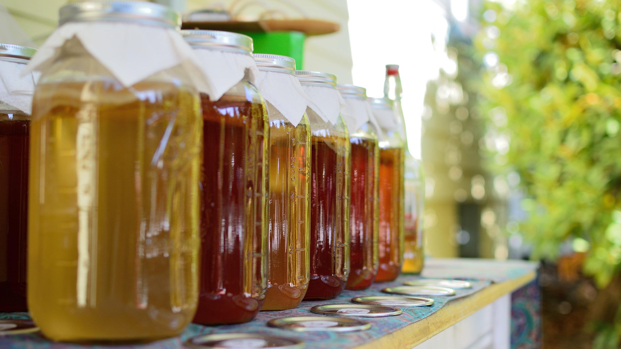 fermento, bebida, kombucha