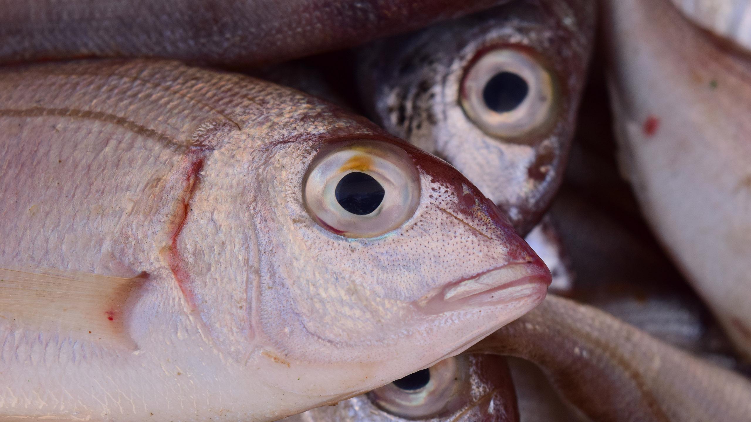 ¿Cuánto tiempo dura un pescado en el refri?