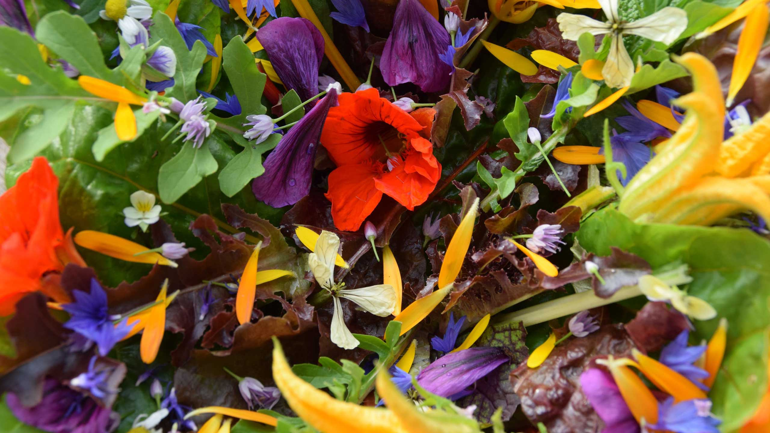 flores comestibles, usos, colores, sabores, aromas, sabor