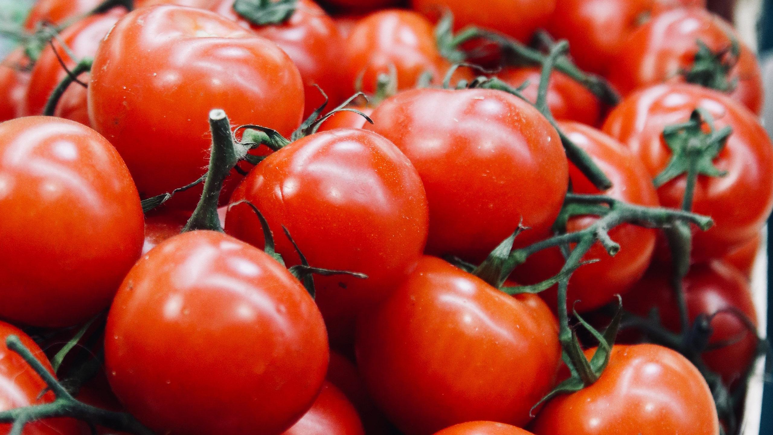 jitomates, la tomatina, españa