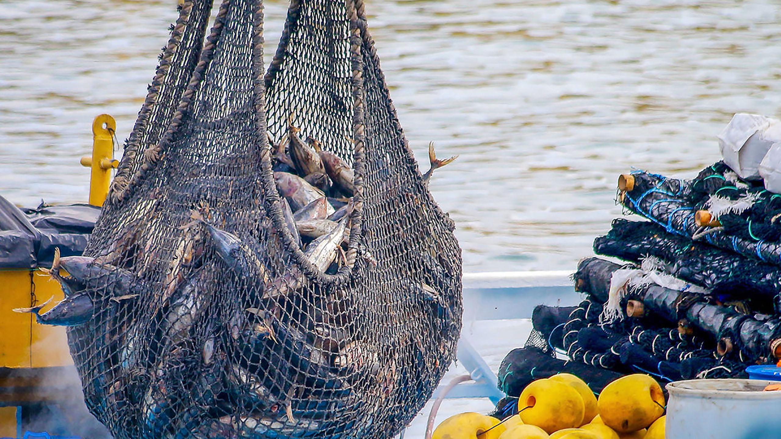 atún, pesca, pesca sustentable