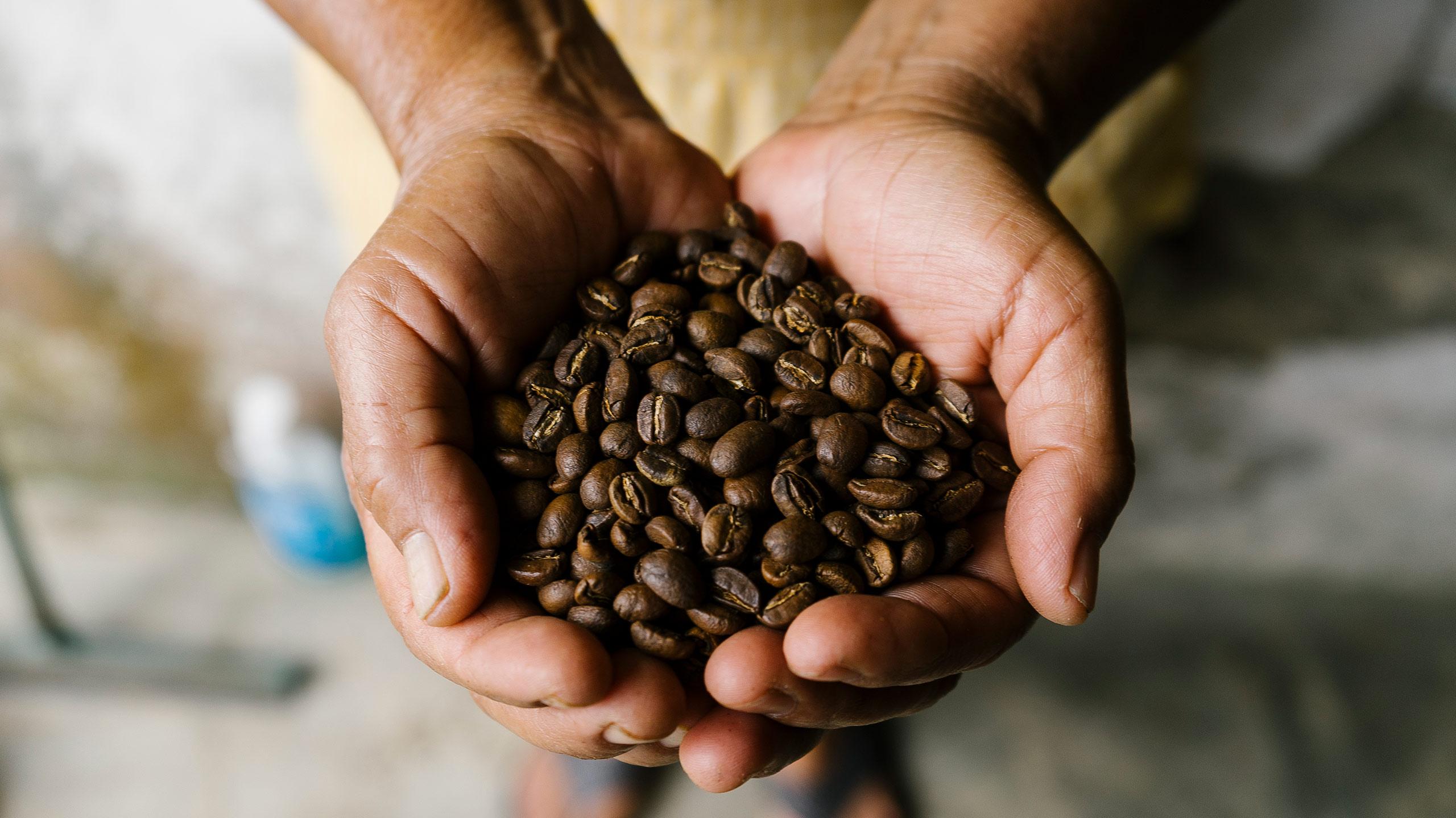 café en chiapas