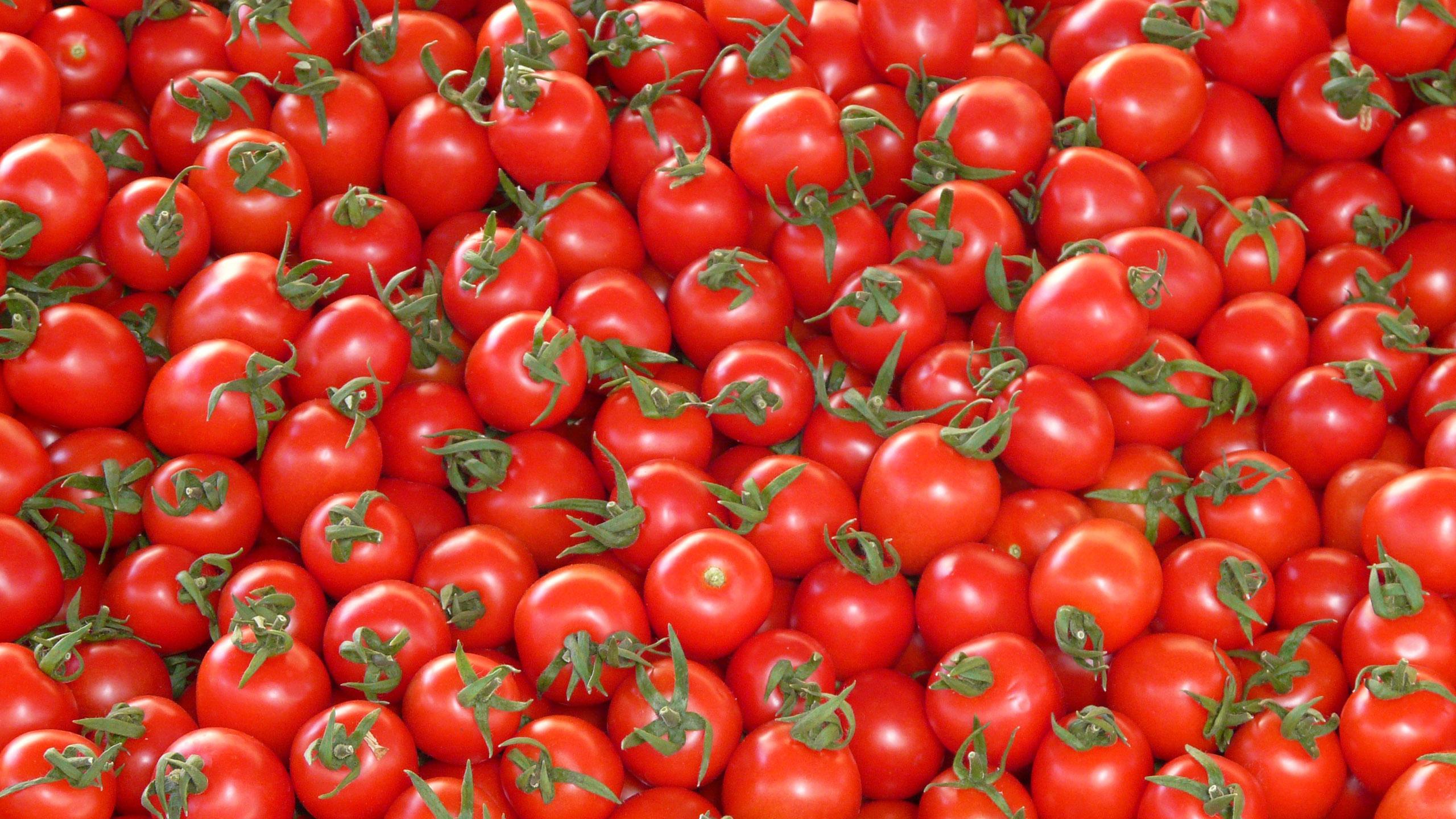 jitomate, tomates, coronavirus