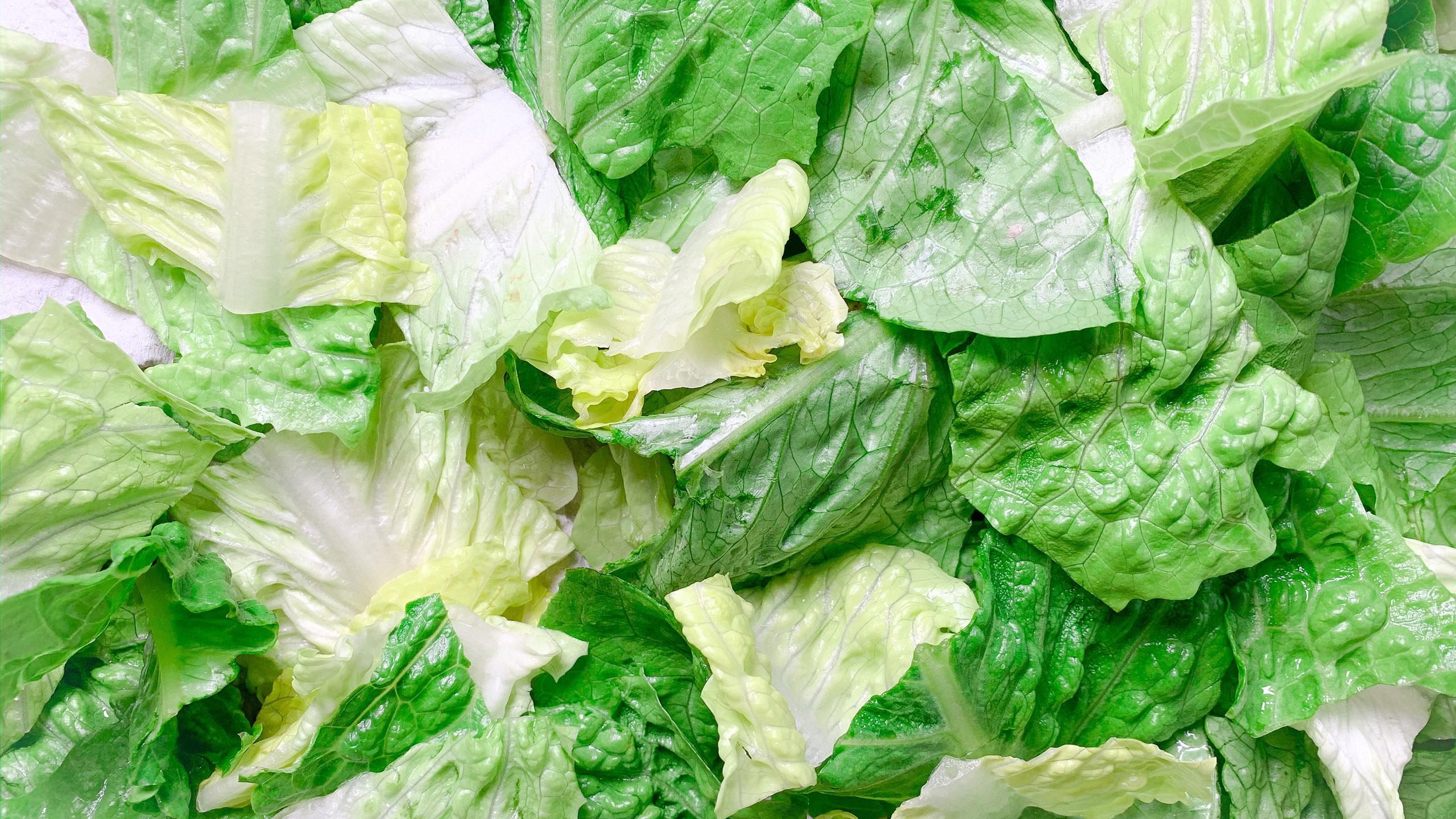 lechuga, hortalizas, tips para revivir comida