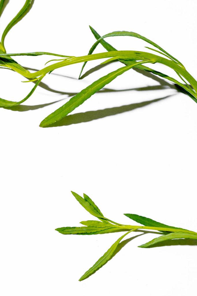 chepil, hierbas frescas, hierbas