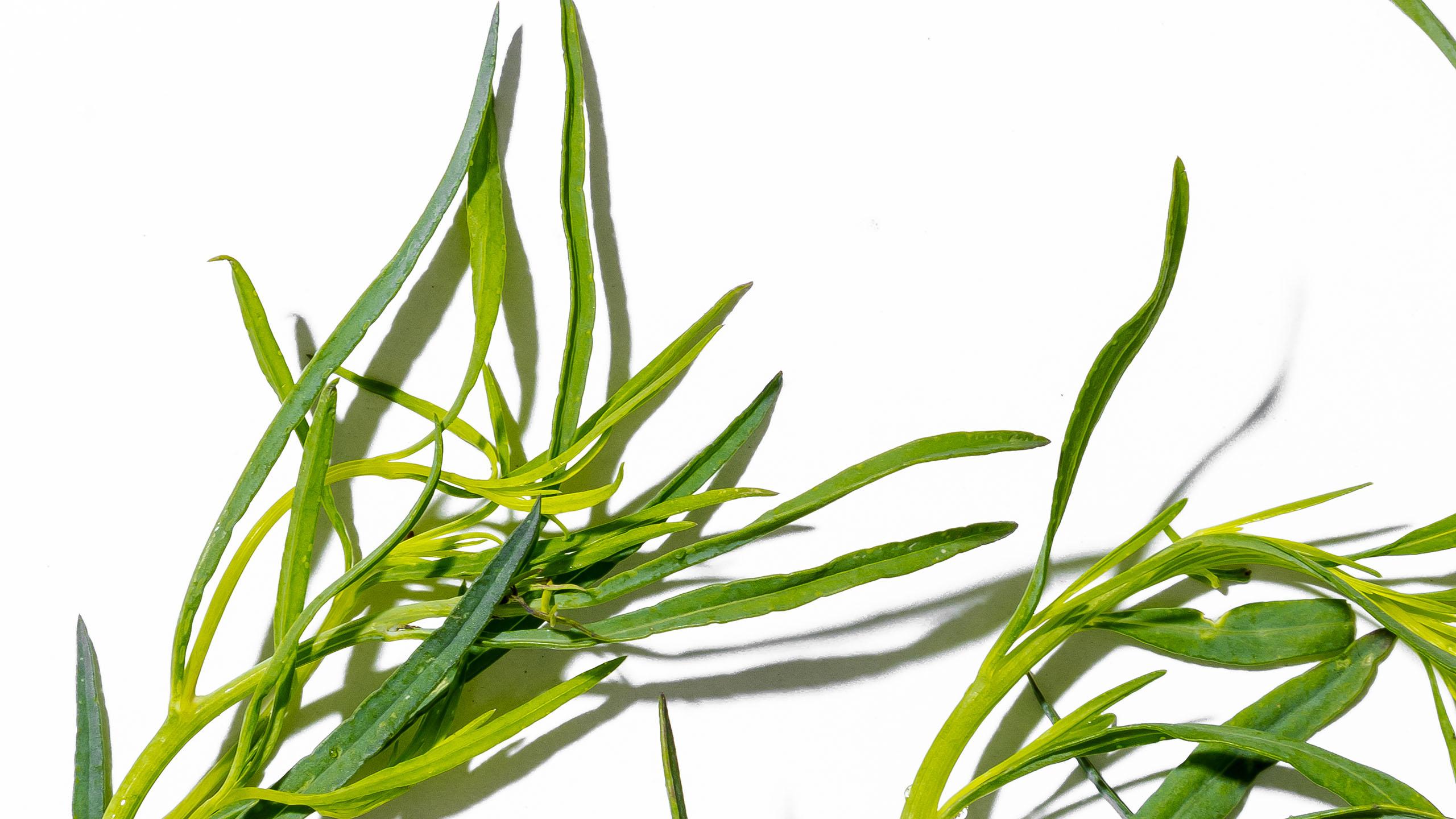 chepil, hierbas frescas