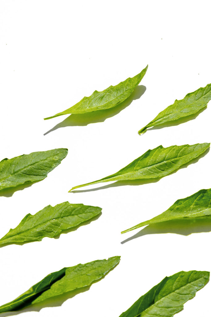 epazote, hierbas frescas