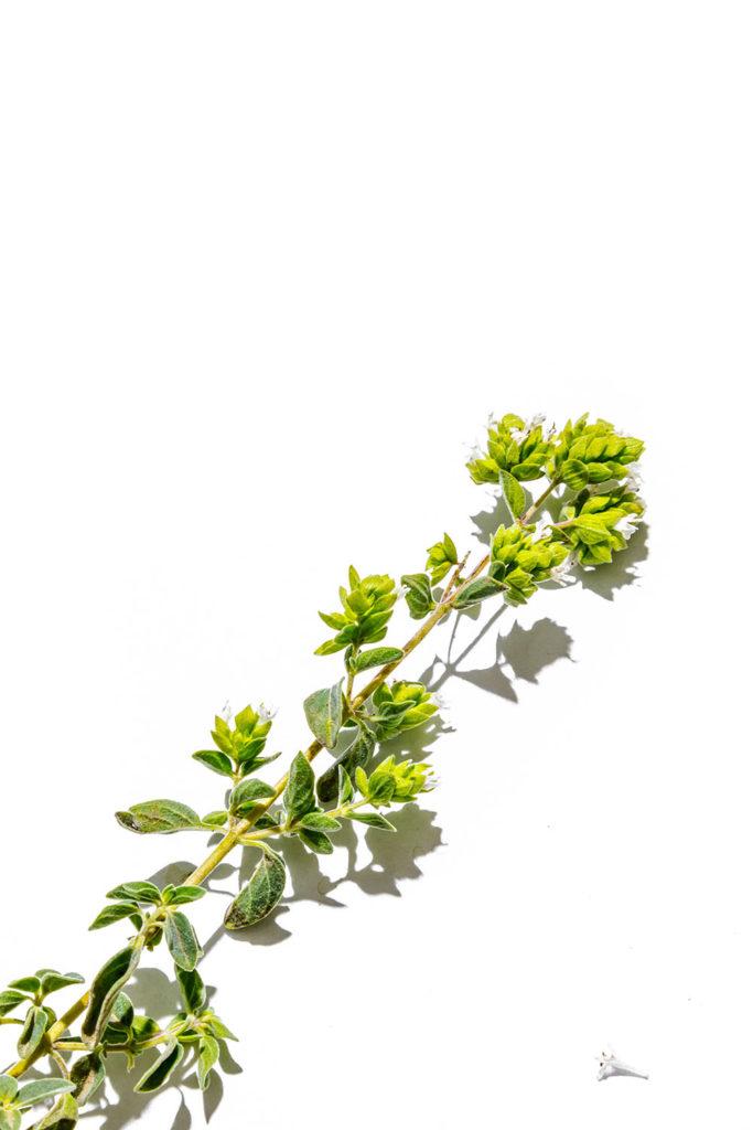 tomillo, hierbas