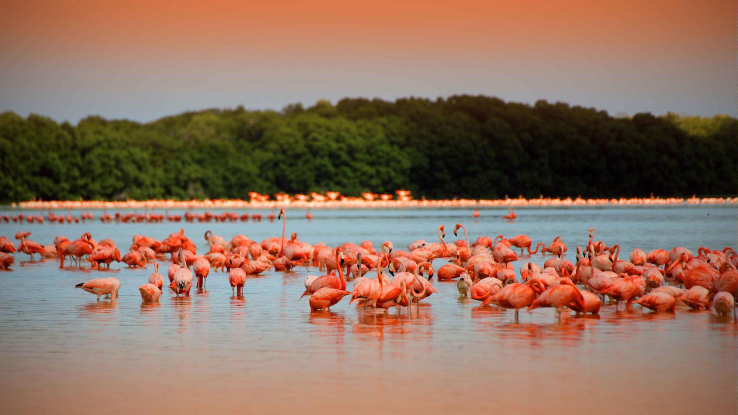 celestum-flamingos-destinos-yucatan