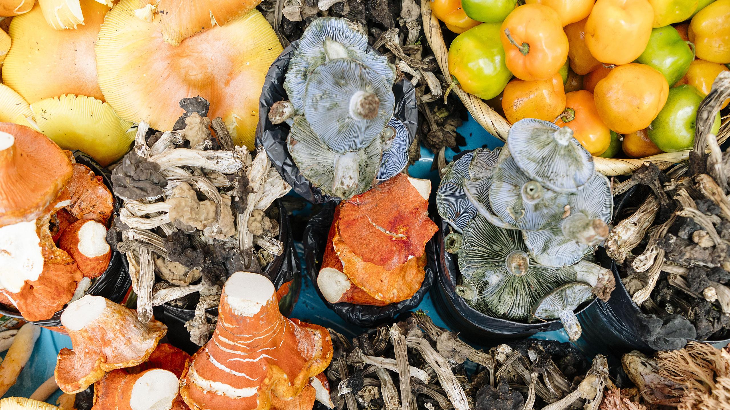 hongos de lluvia comestibles
