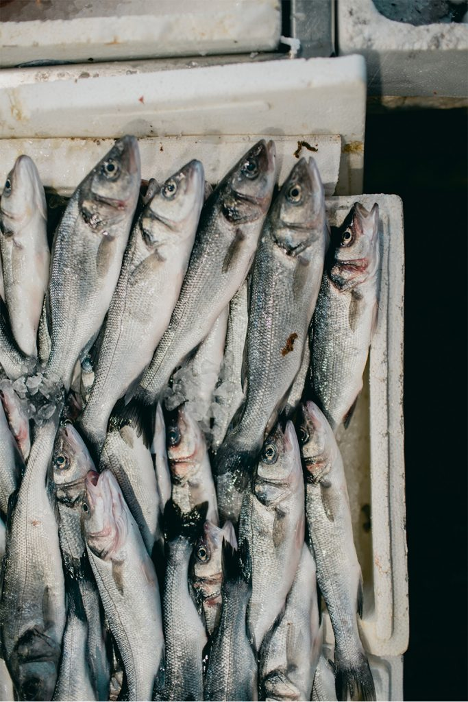 pescados con mercurio