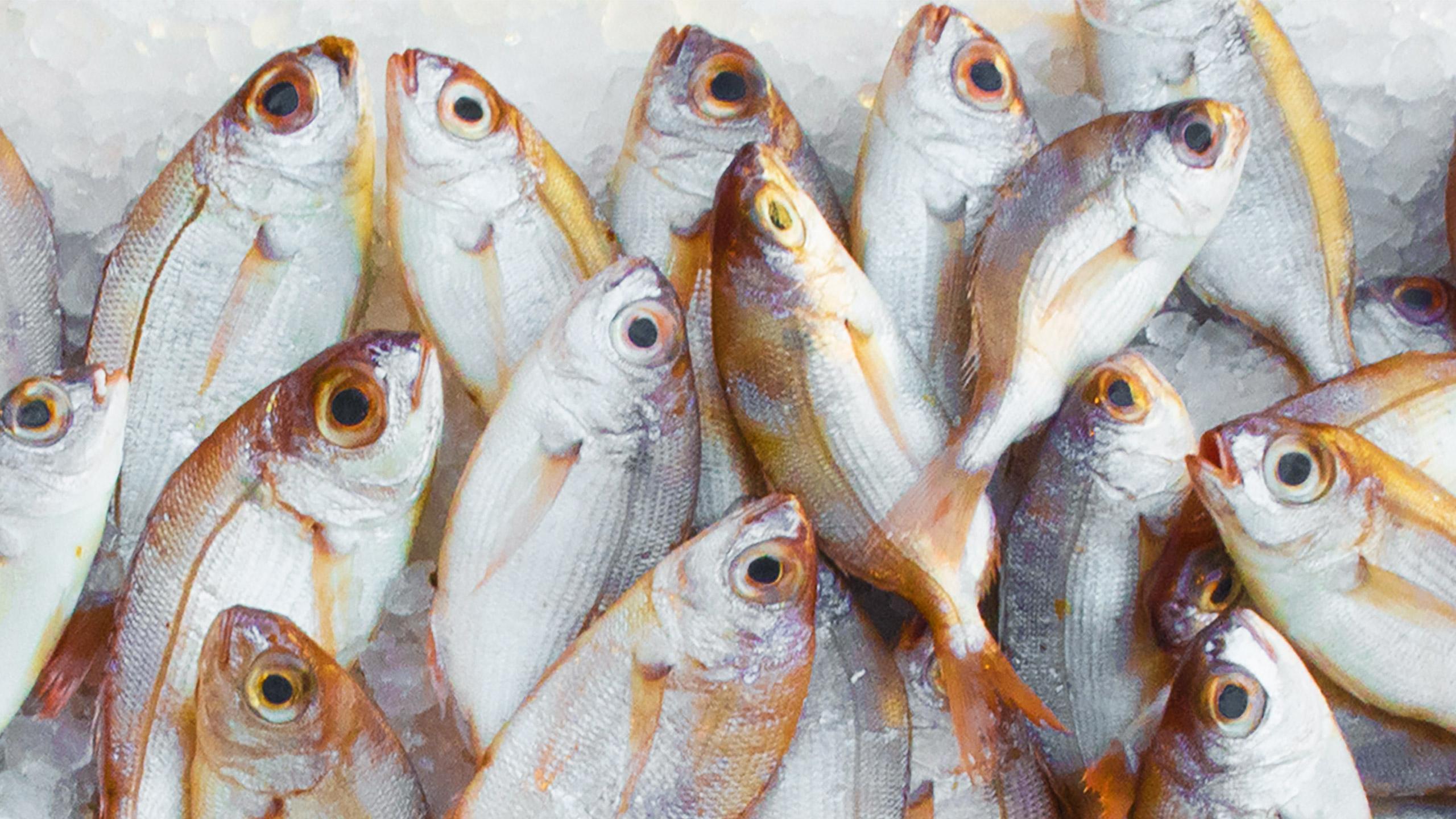 pescados con mercurio_destacada