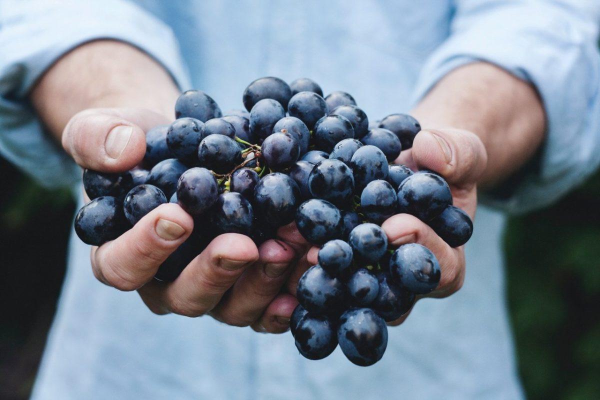Uva-de-vino