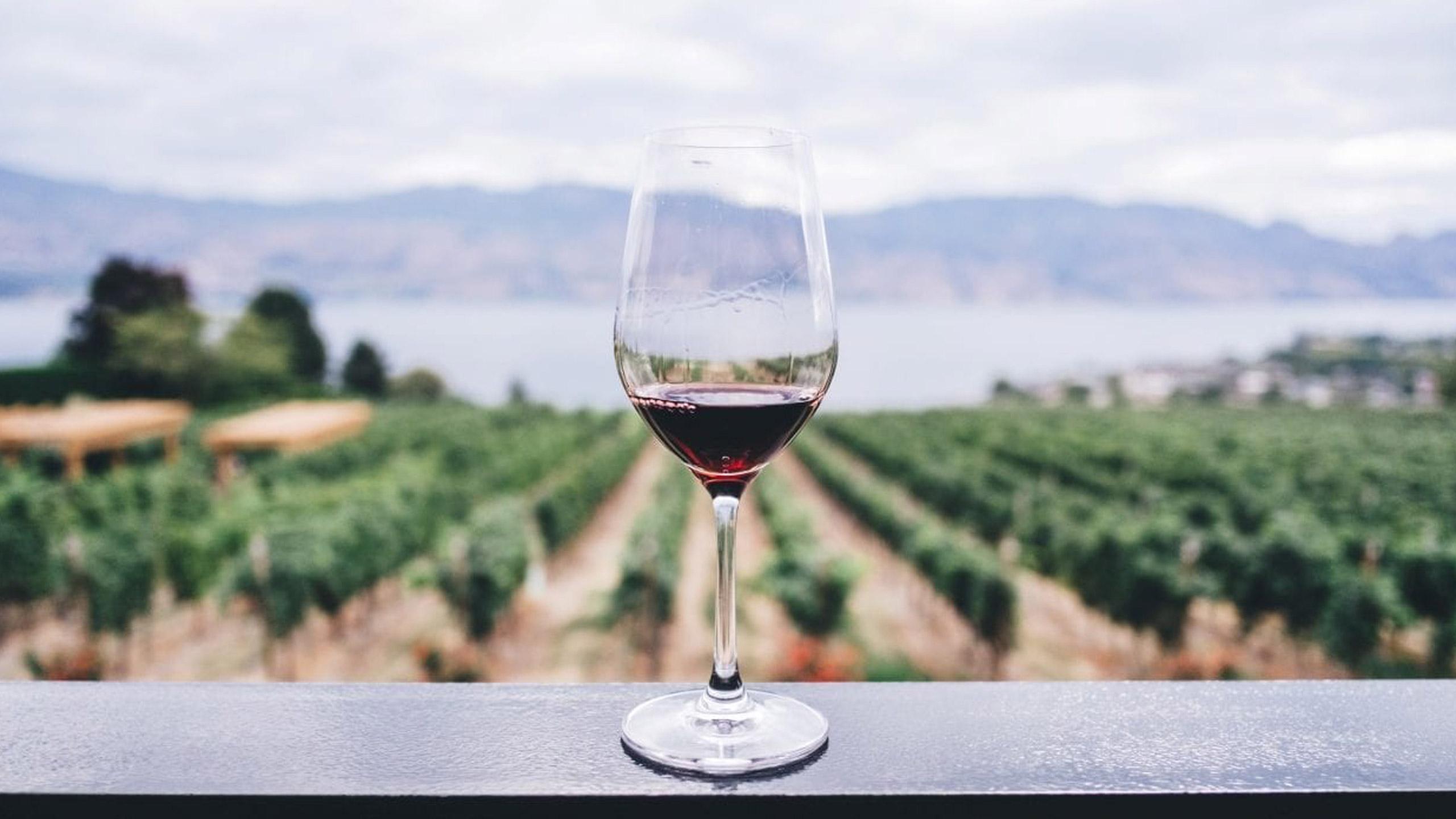 vino-mexicano-denominacion-de-origen