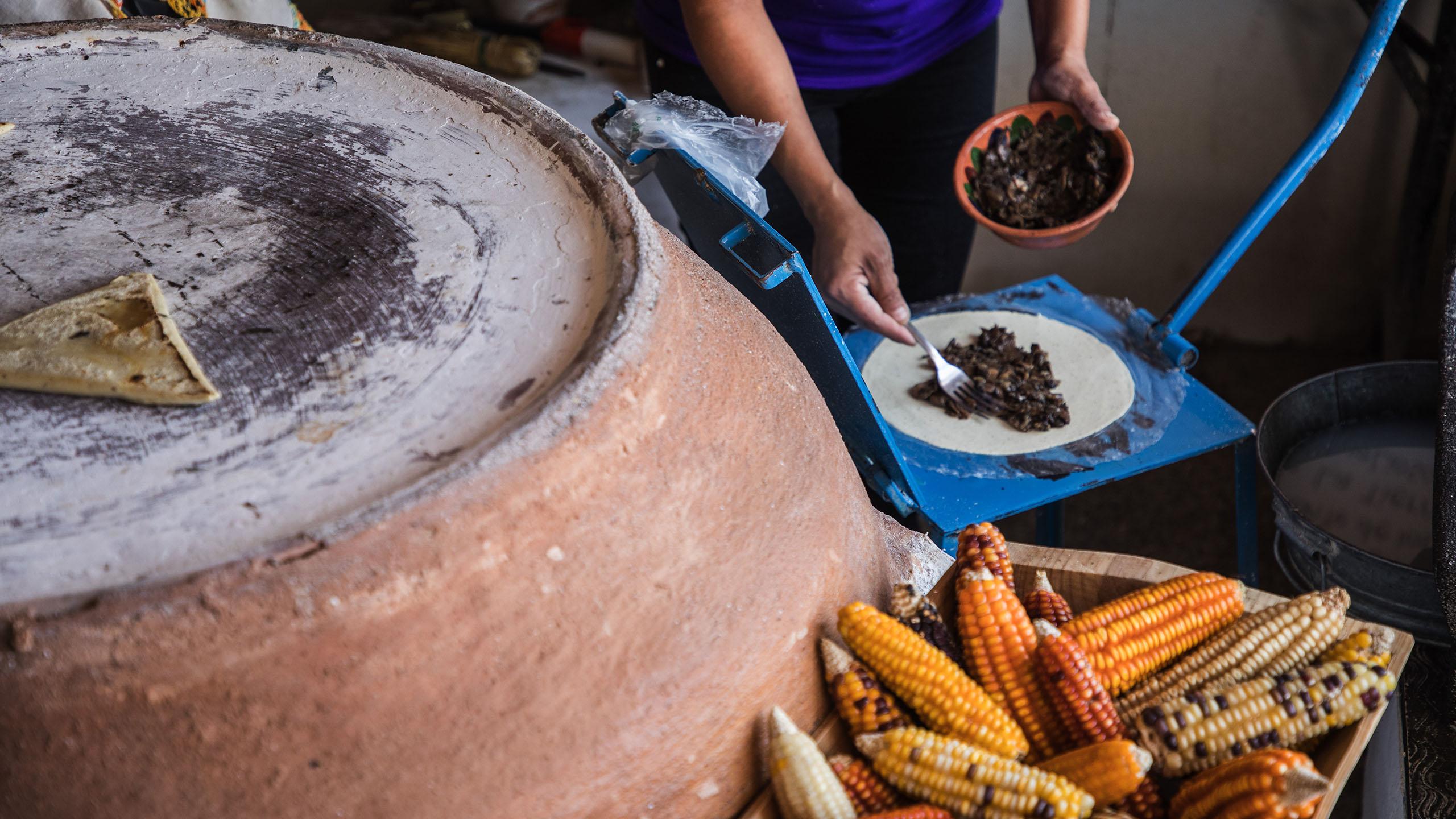 Itanoní, maíz, maíz criollo