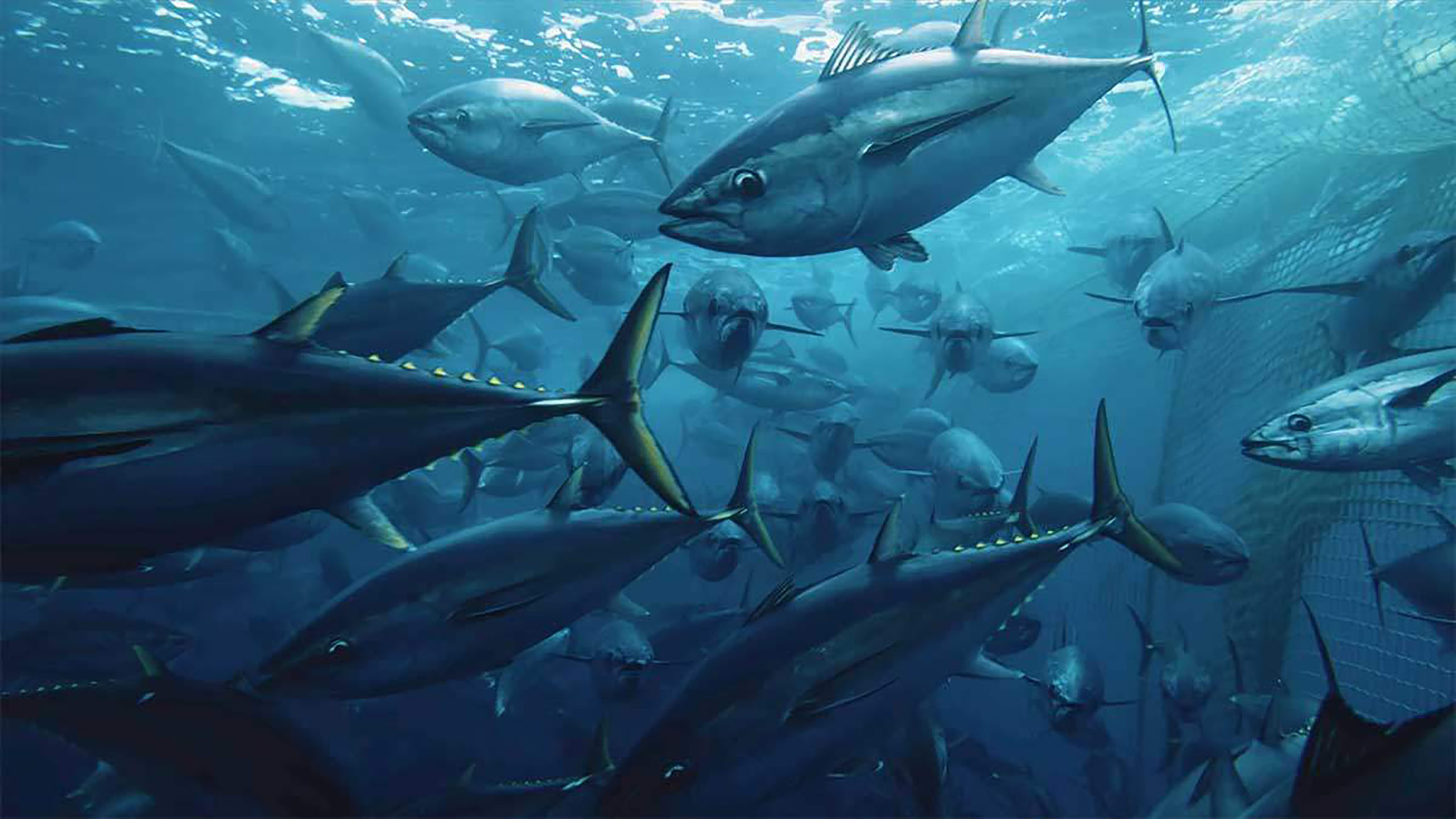 pesca, pesca sustentable, documental, Seaspiracy