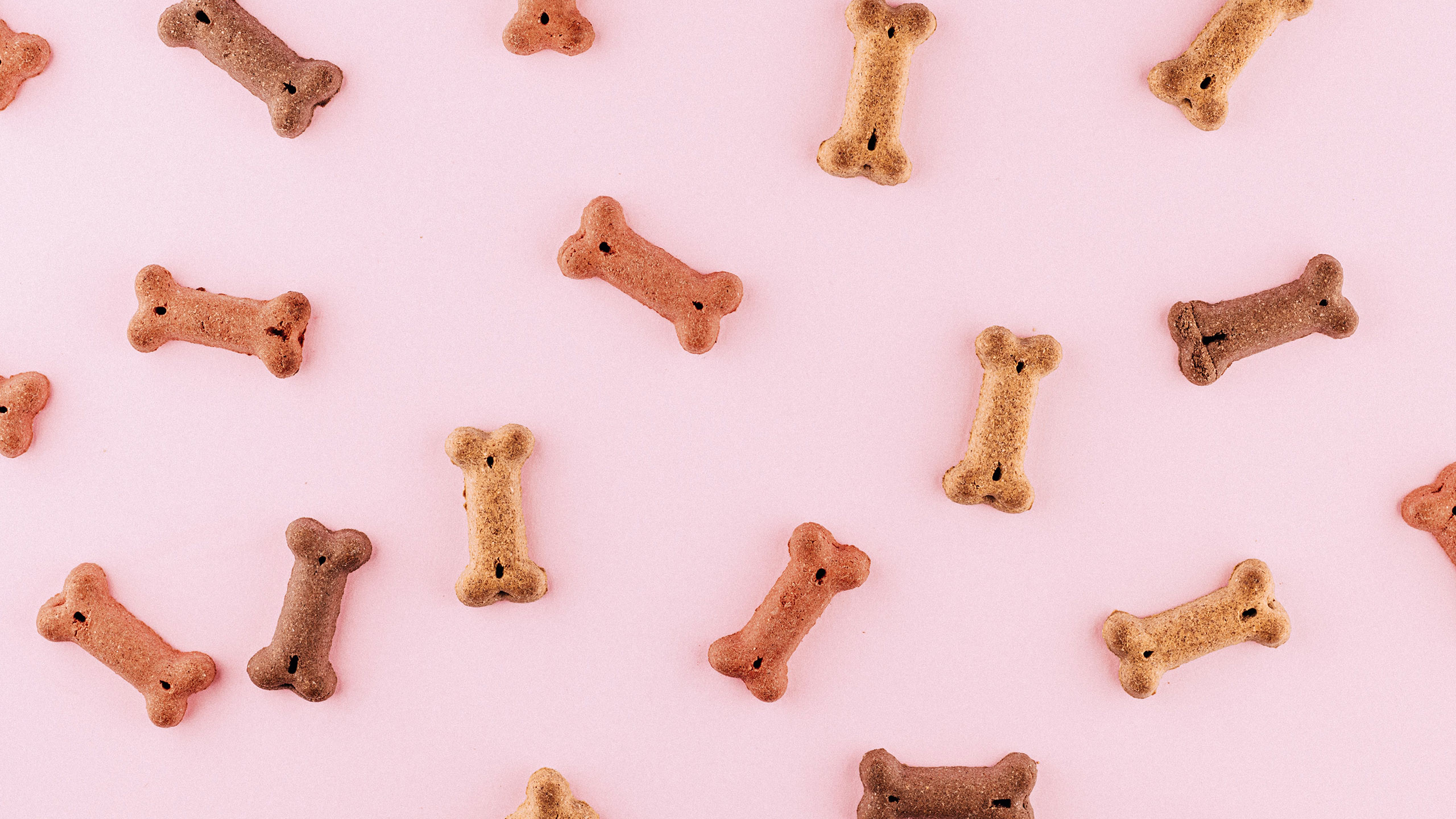 galletas-para-perros
