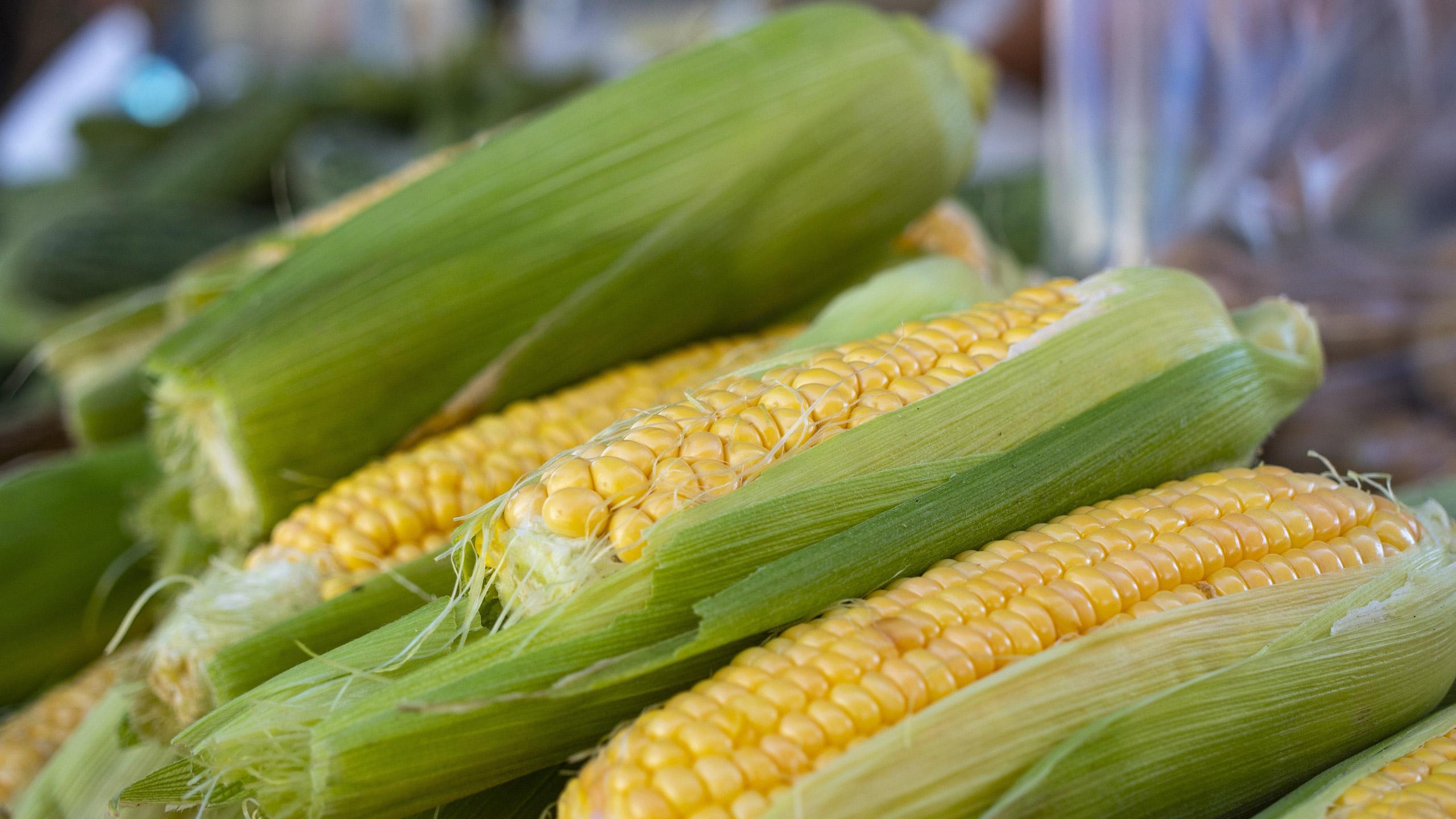precio-maiz
