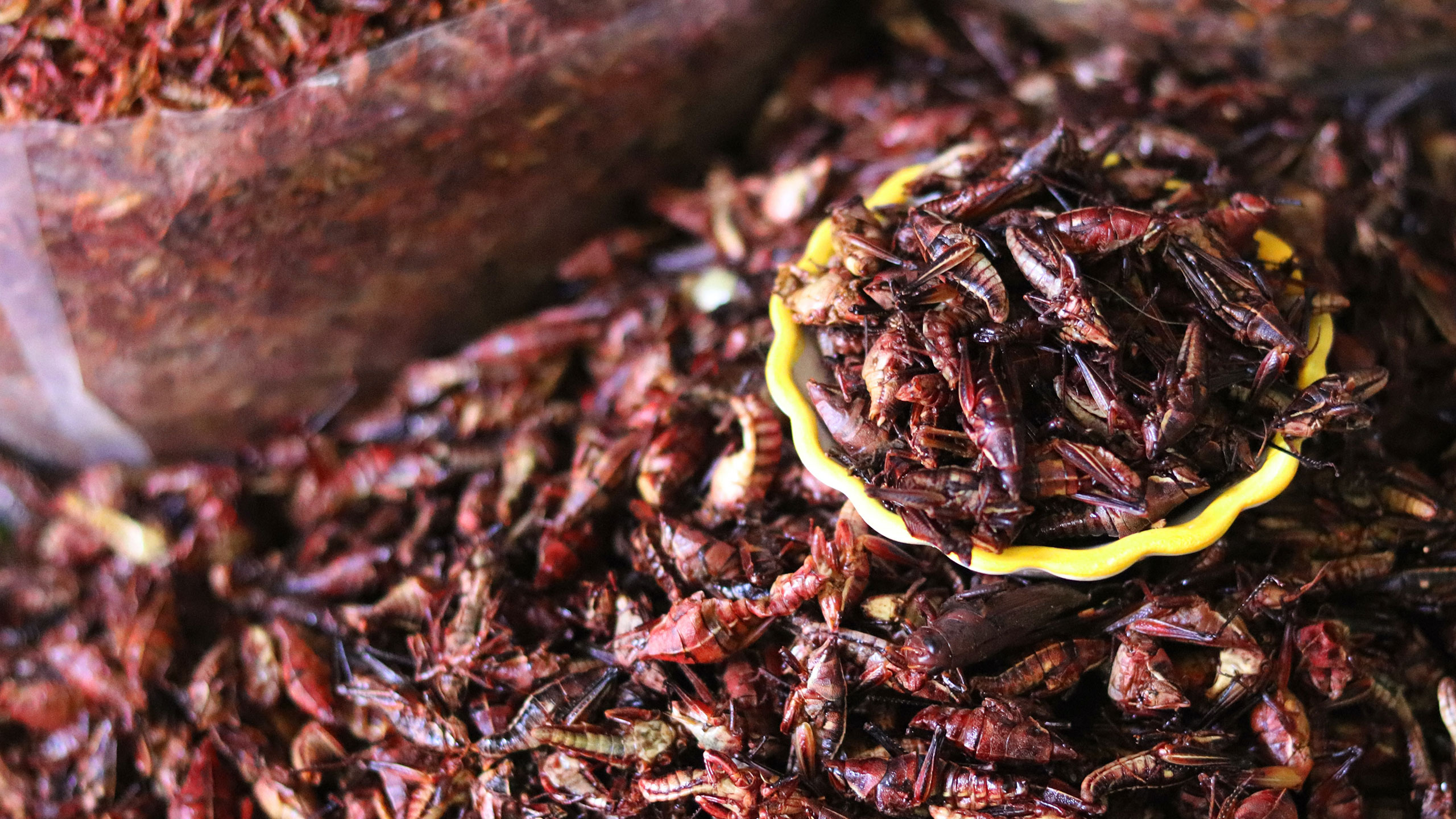 insectos-superalimentos