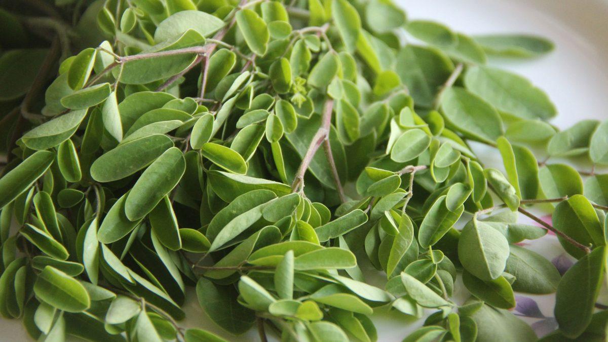 hojas-de-moringa