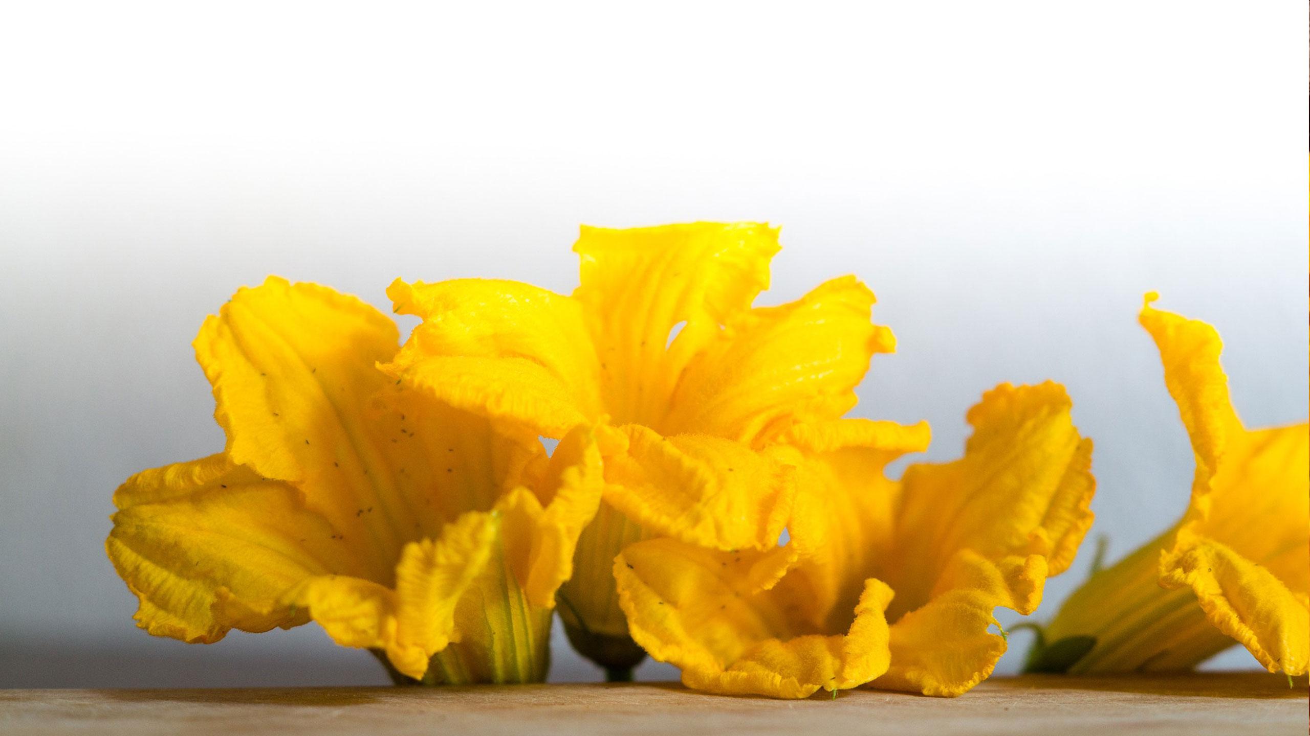 flor-de-calabaza