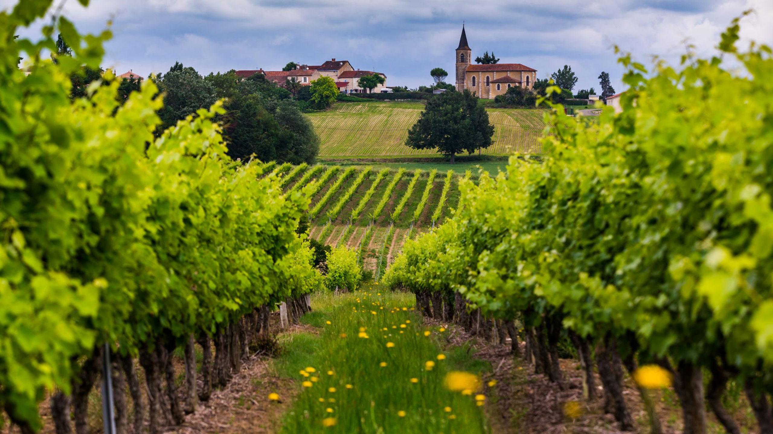 Regiones-francesas-vino
