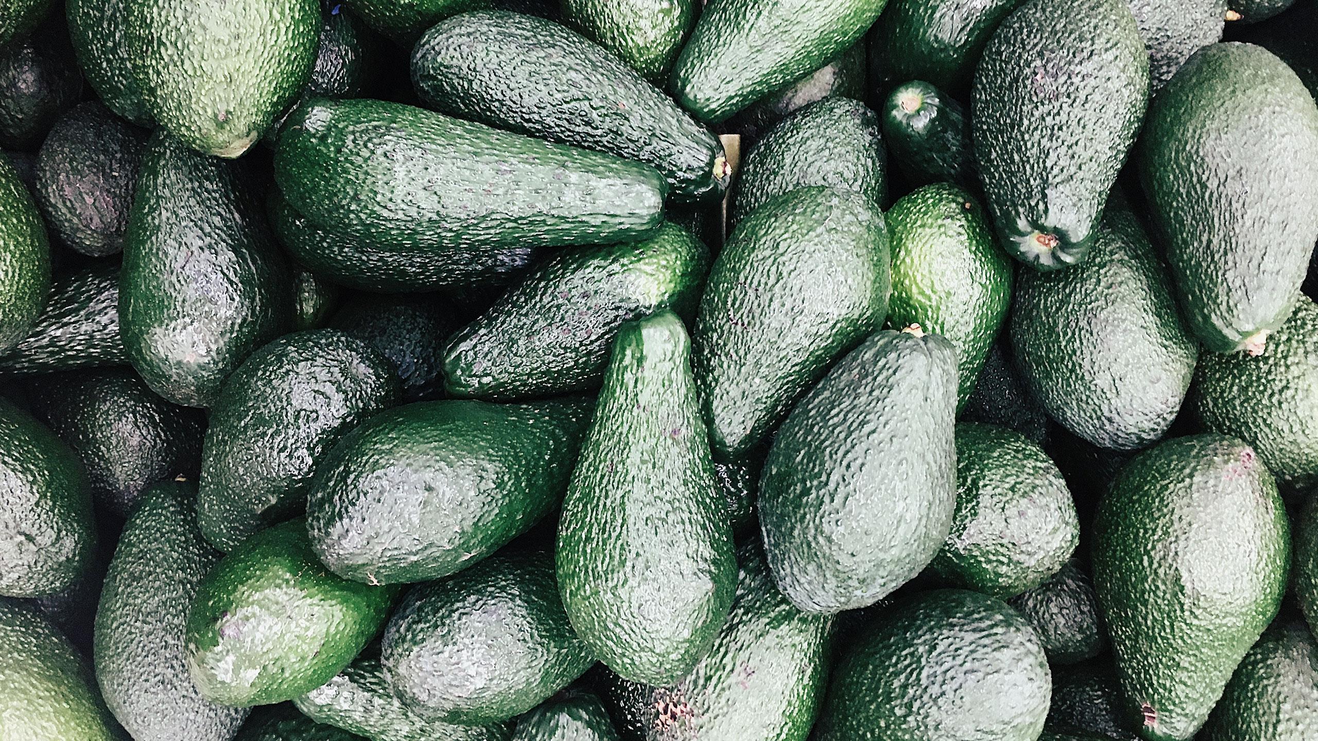 aguacate-fruta-2030