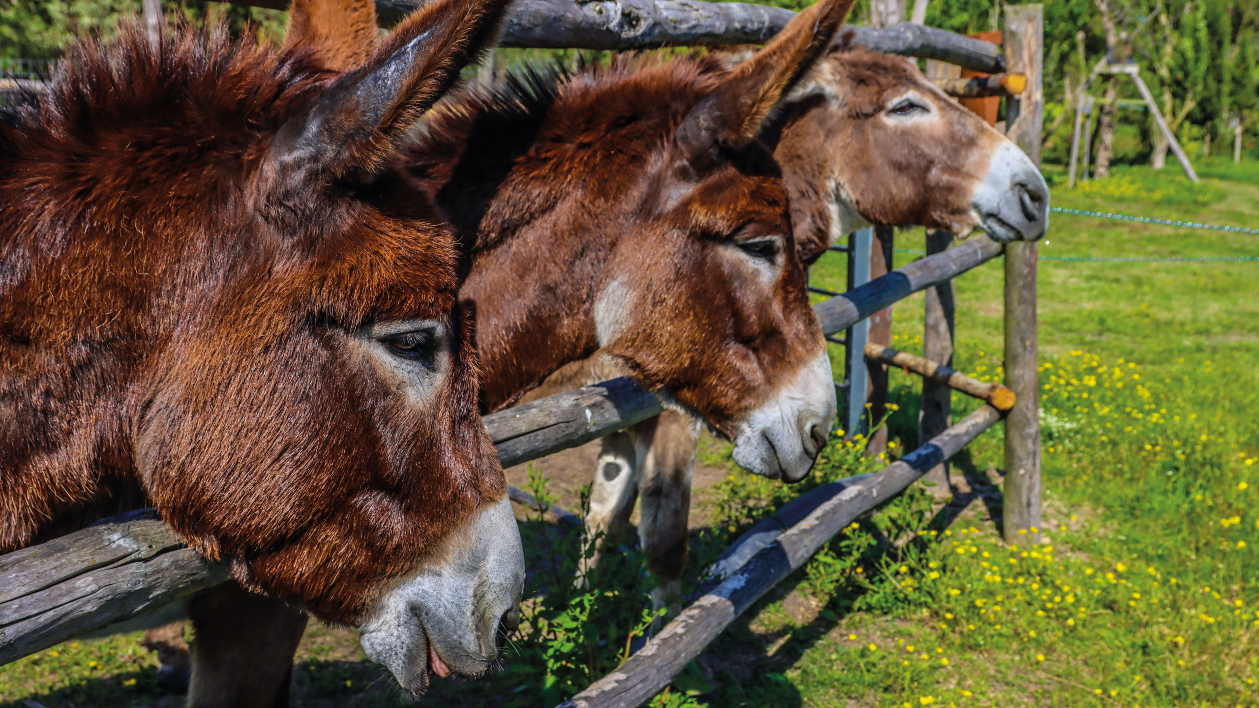 donkey, burro, queso