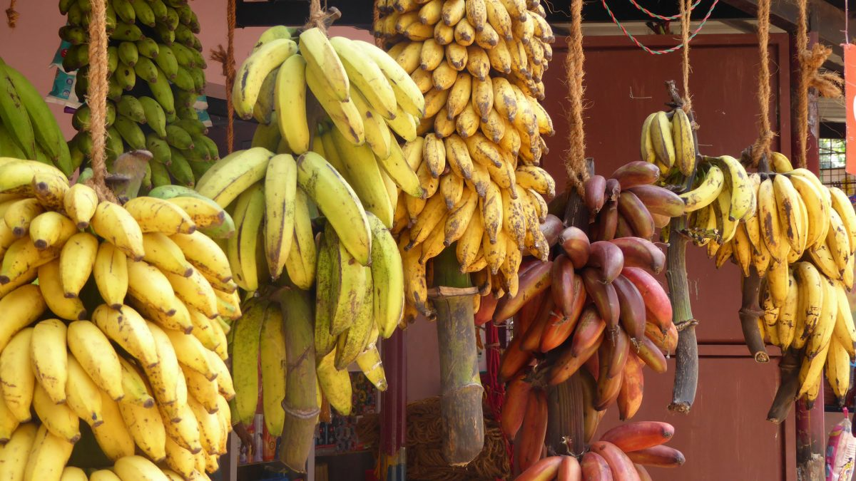 platano-fruta-tropical-mas-consumida