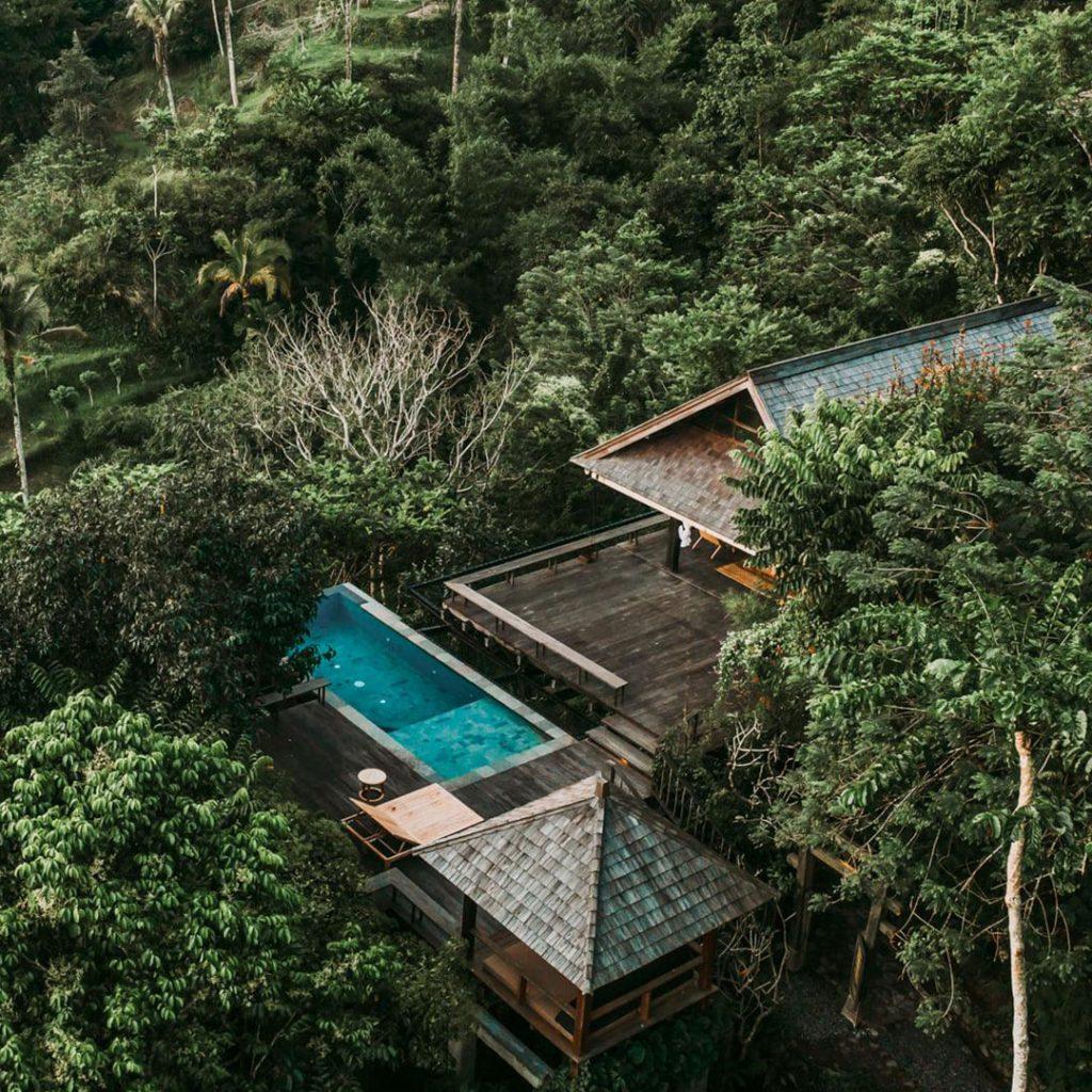 Banyan-tree-escape