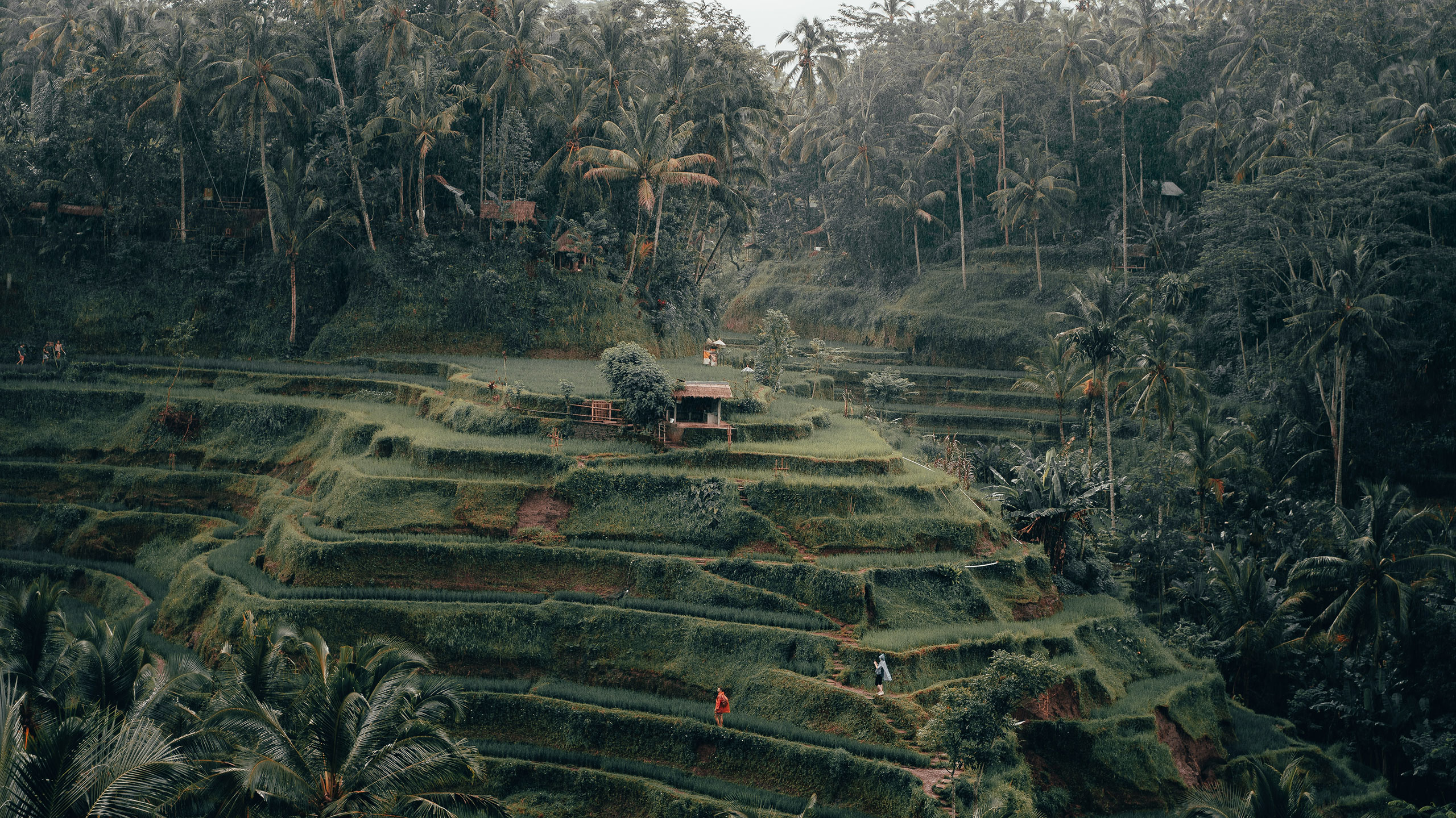 Banyan-tree-escape-Bali