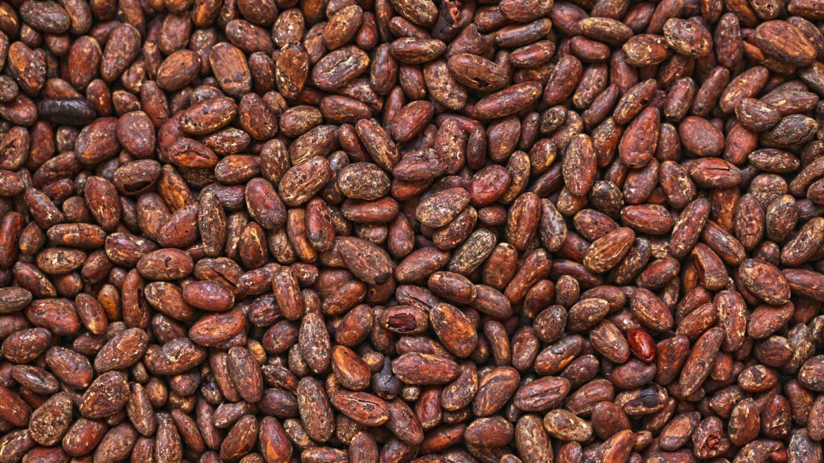 cacao-chiapas