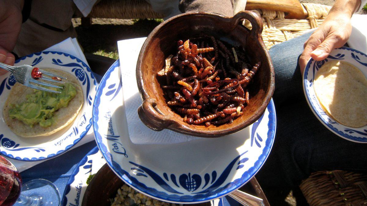 gusanos-de-maguey