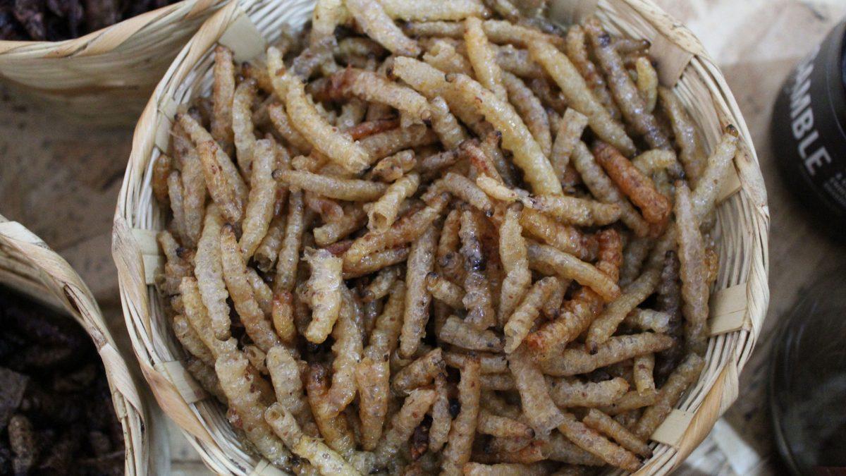 gusanos-de-maguey-blancos