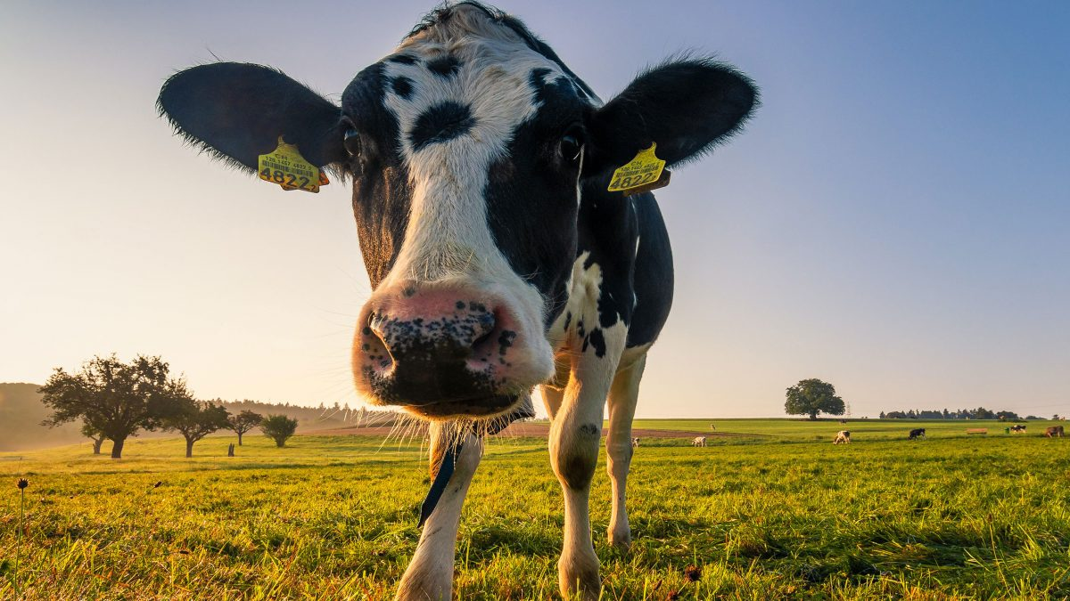 leche-sin-animales