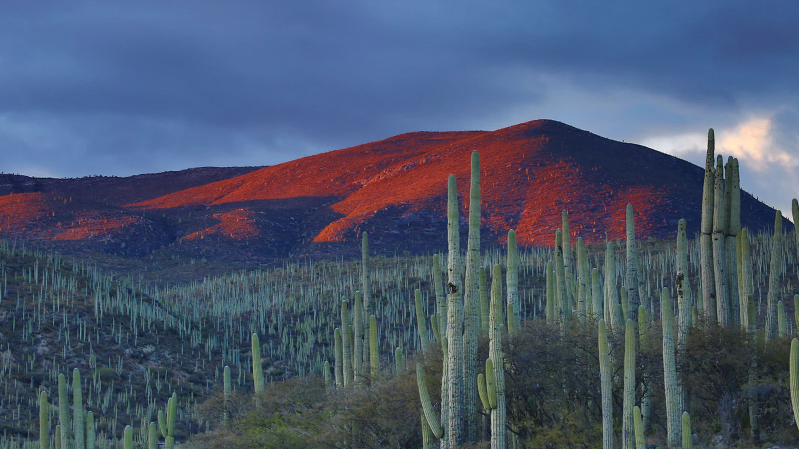mexico ecosistemas