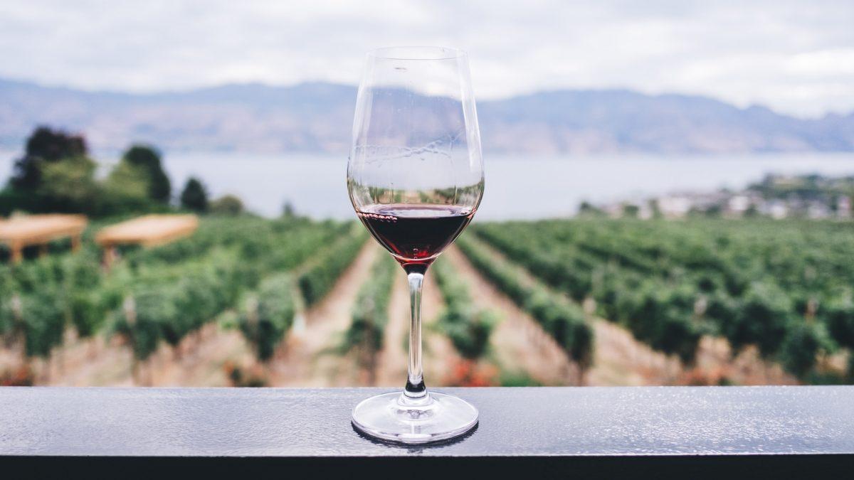 vino-tinto-pinot-noir