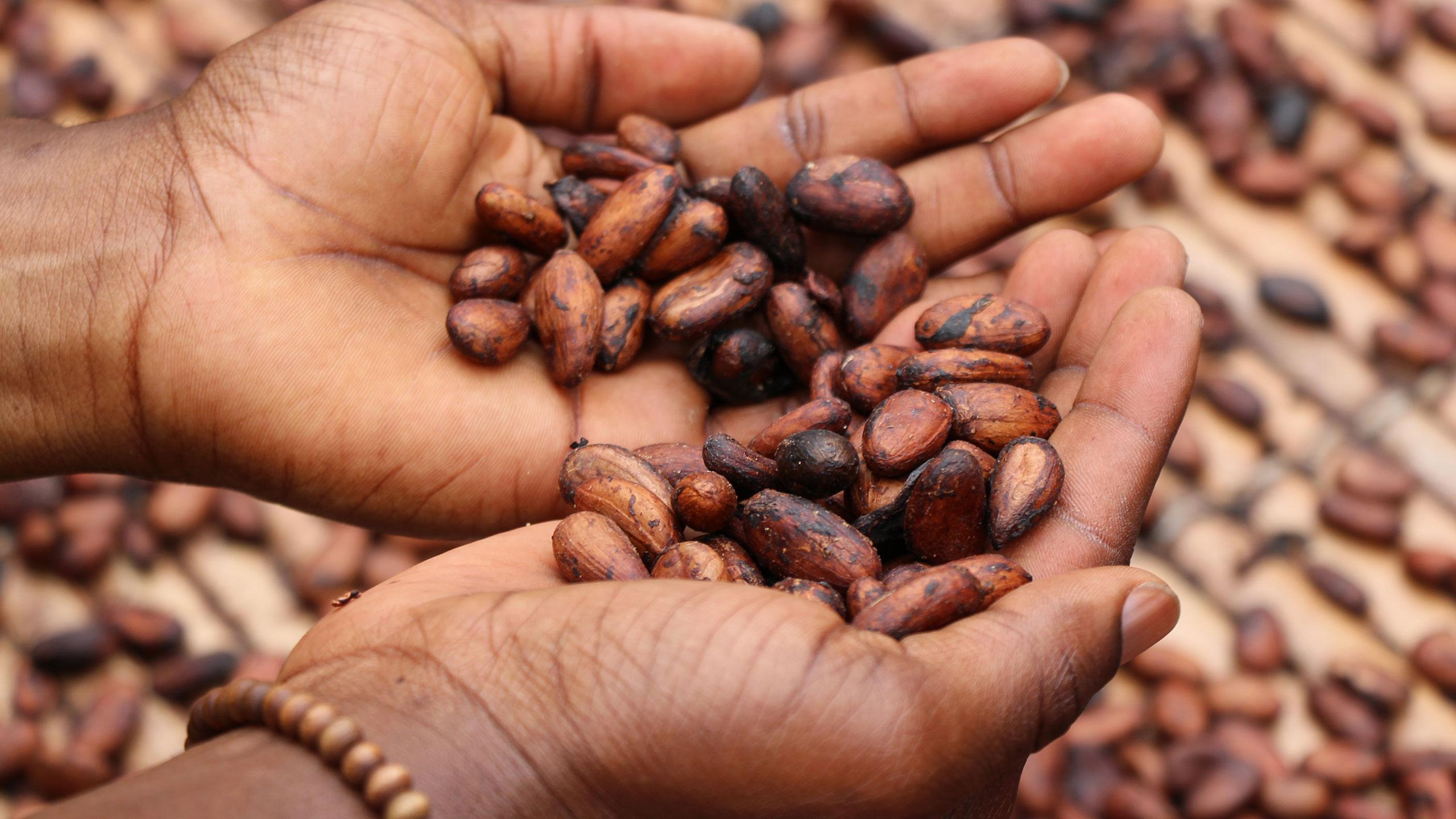 ruta-de-cacao