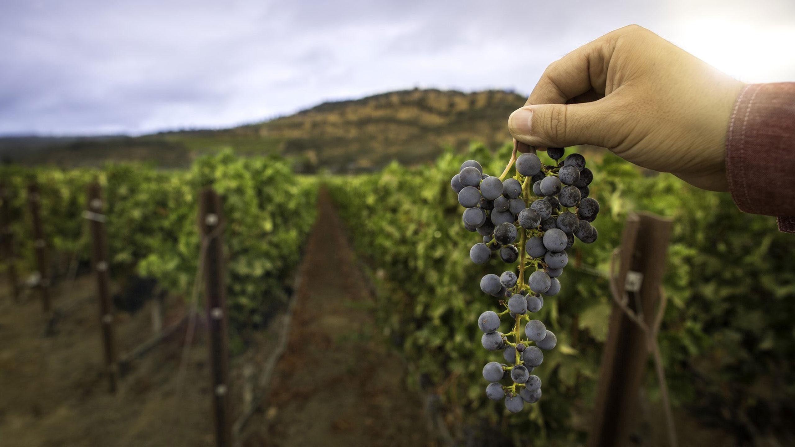 vinos-wagner-vinedos